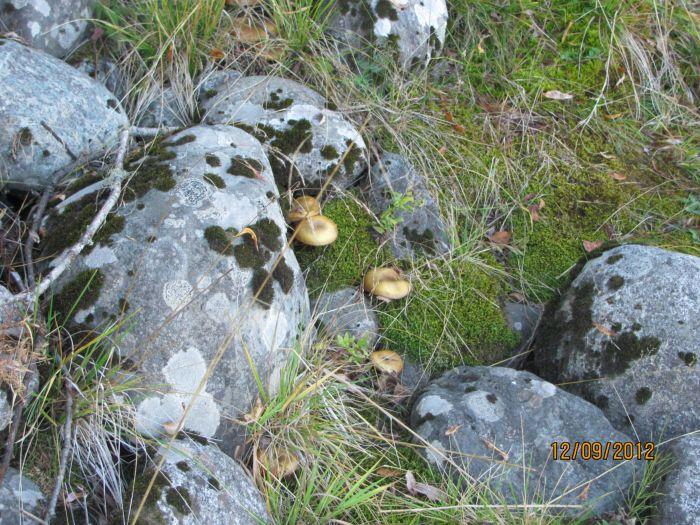 Камни и грибы