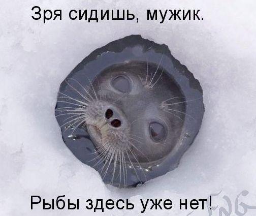 лунка с глазами))))