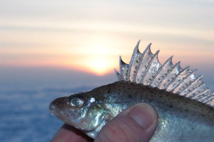 Царь-рыба
