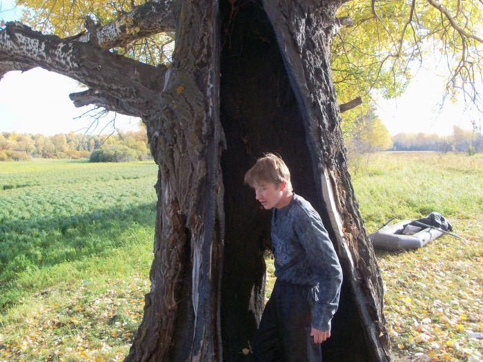 Доброе деревце