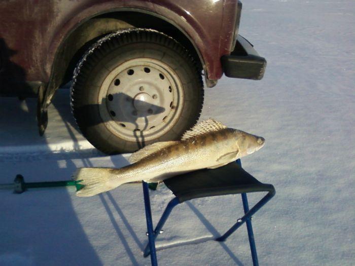 31 лунка - 1 рыбка