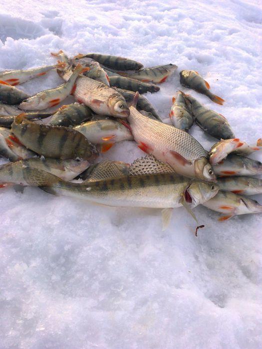 Ассортимент улова на мормышку с одной лунки в Береговом.