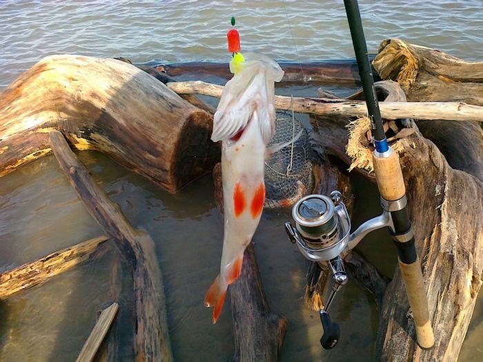 Рыбалка в тульской области матвеевка