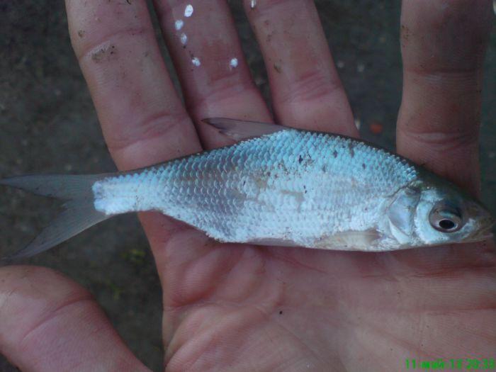 Что за рыб?