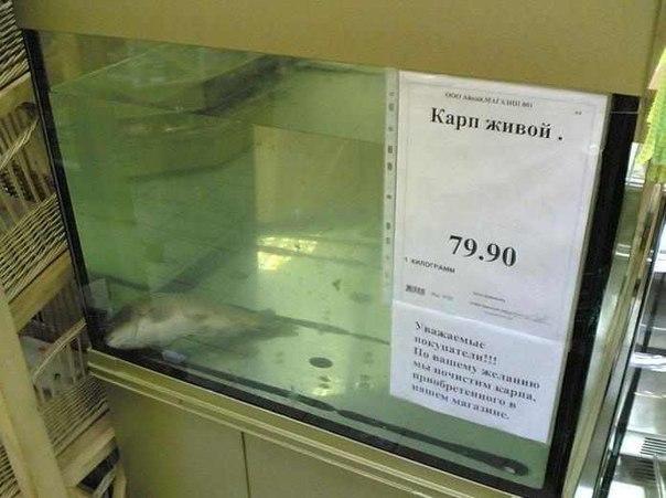 карп живой)))