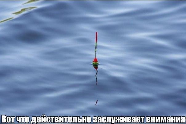 действительность)))
