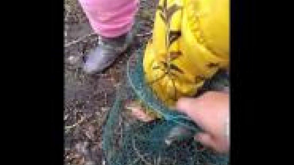 Зарыбление или воспитание рыболова