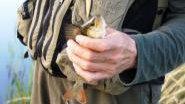 Ловля окуня на воблер видео