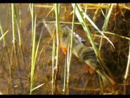МК : Ловля на отводной поводок видео Full HD