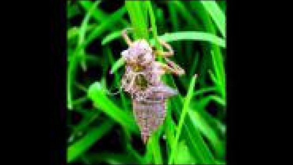 Рожденье стрекозы