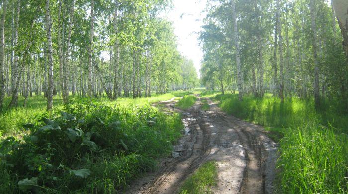 Дорога к реке Орда
