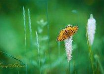 Просто бабочка )