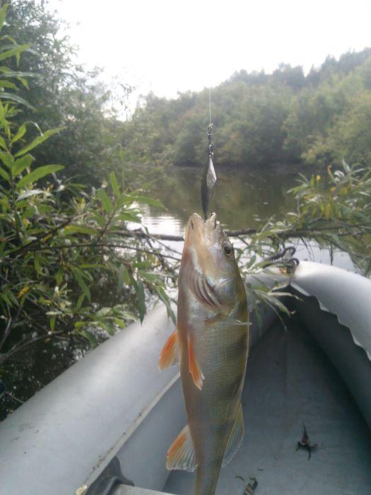 Пробовал отвесное блеснение с лодки