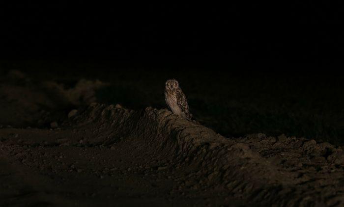 По пути на ночного судака