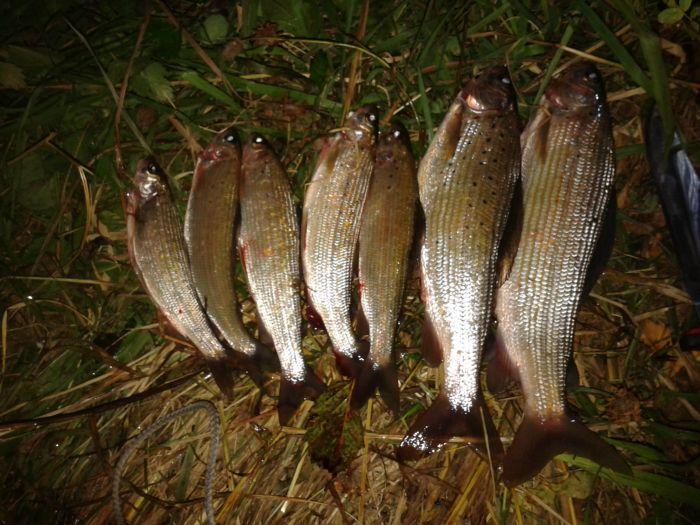 Рыбалка на ине алтайский край видео