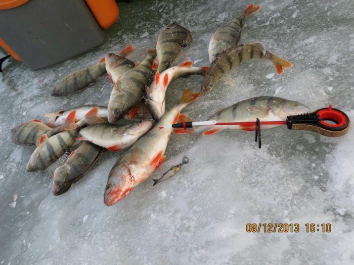 Береговое, рыбаков много-окуня мало!