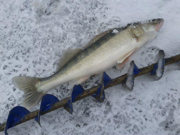 Первая рыбка в сезоне:)