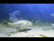Ловля ротана подводные съемки