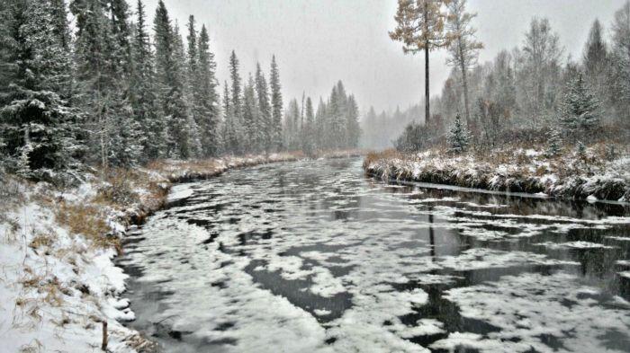 Снежница гонящая хариуса на зимовку.