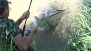 Моя рыбалка №3. Июнь 2013 г. Белый амур.