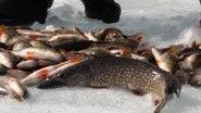 МК : Ловля рыбы зимой