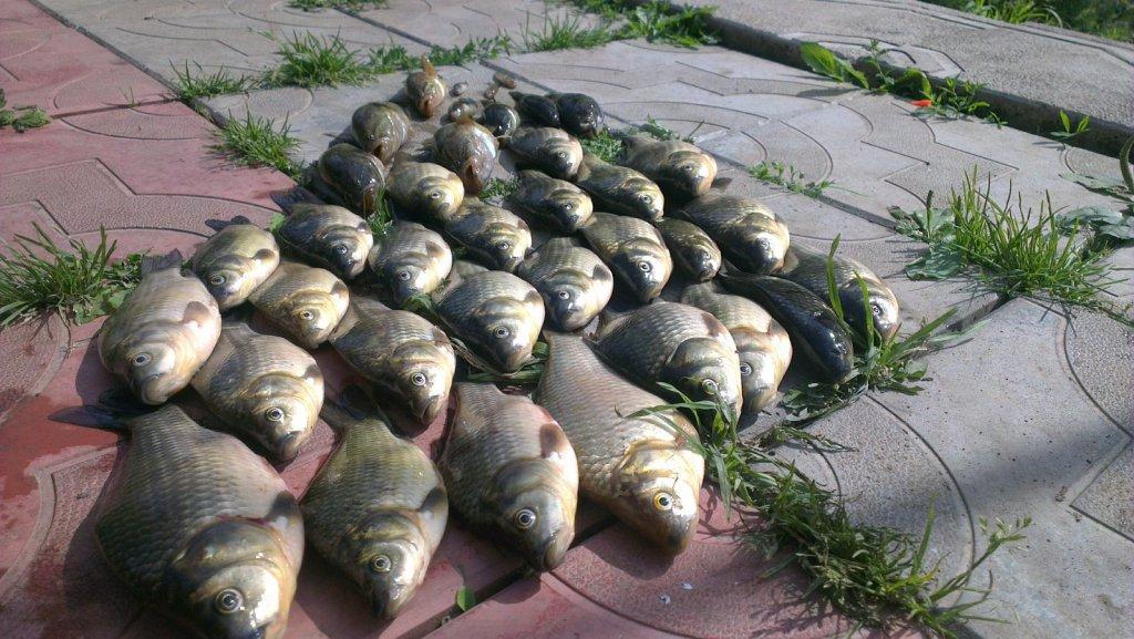 Карасики из пруда