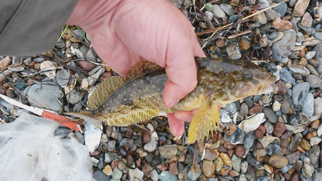 Что это за рыба (Сахалин)?