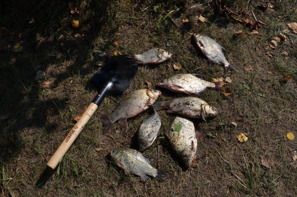 улов коллеги по рыбалке..