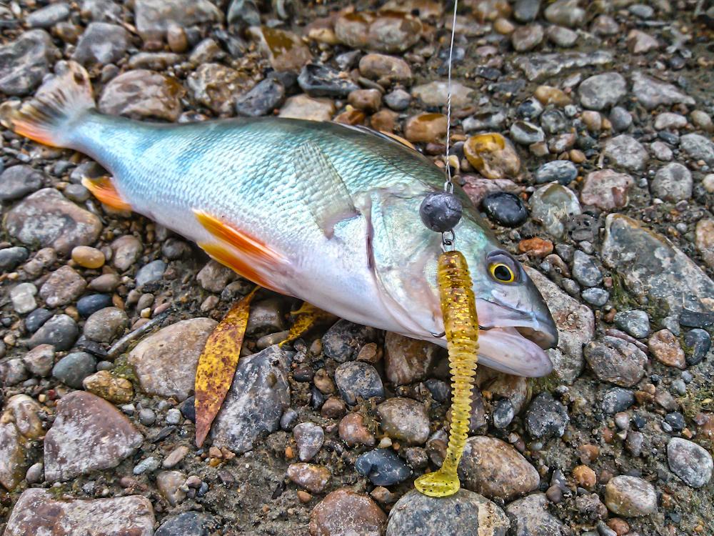 Субботняя рыбалка на р.Обь