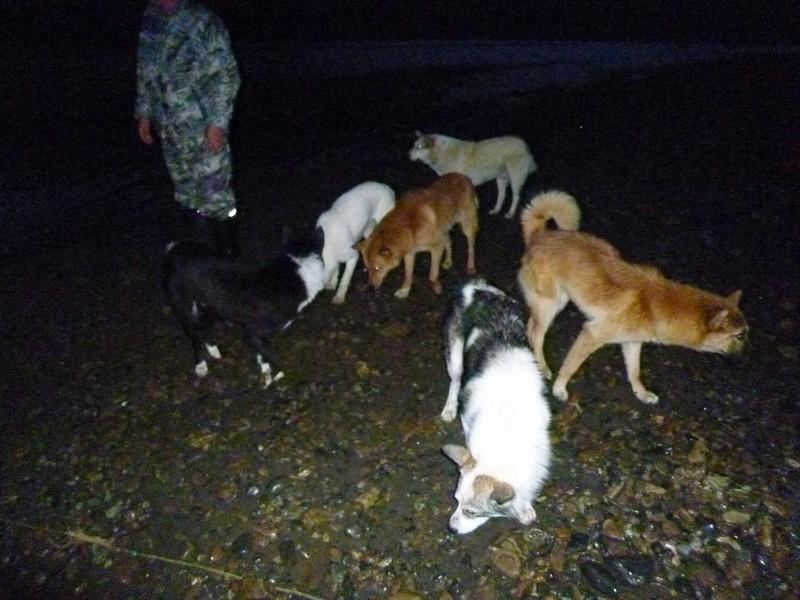 собаки защищают лагерь рыбаков от медведей
