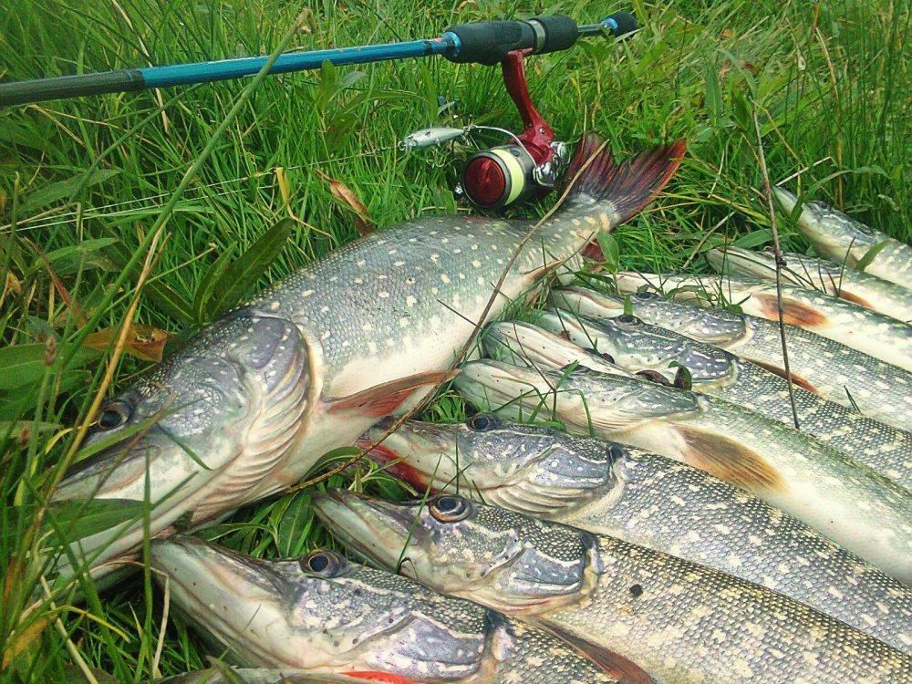 за  пару часов рыбалки на чаусе=)