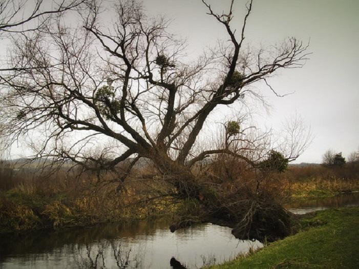 просто красивое дерево...