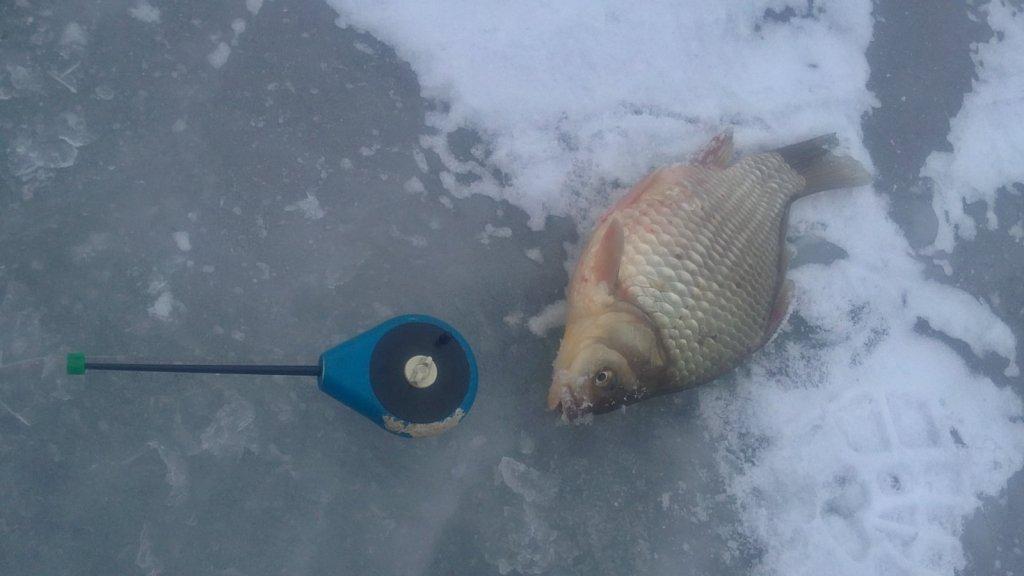Первая рыба зимнего сезона 2014-15