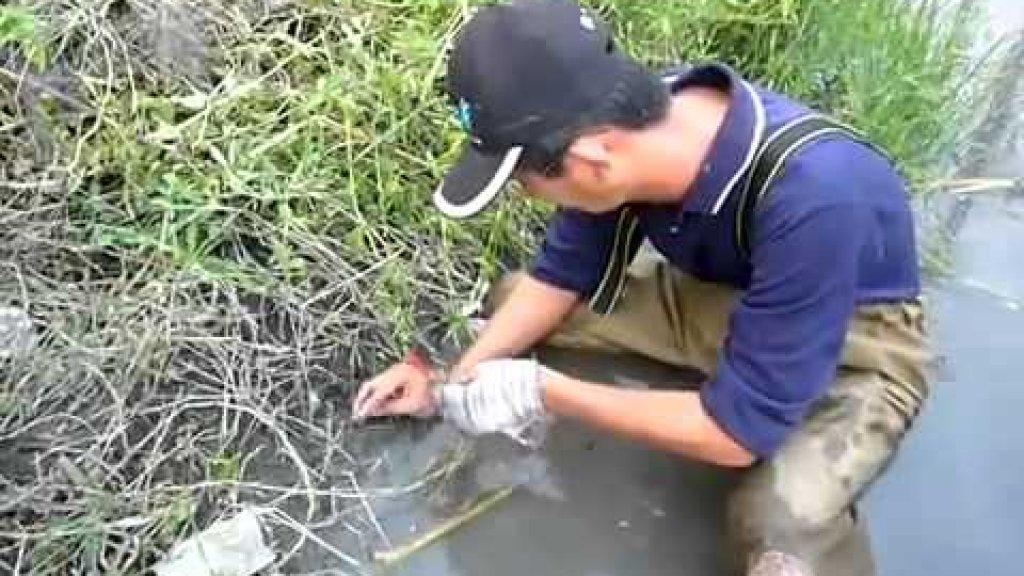 Китайский рыбалка