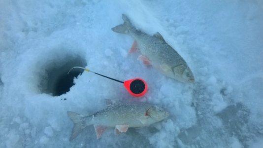 Прогноз клева рыбы в Камень-на-Оби