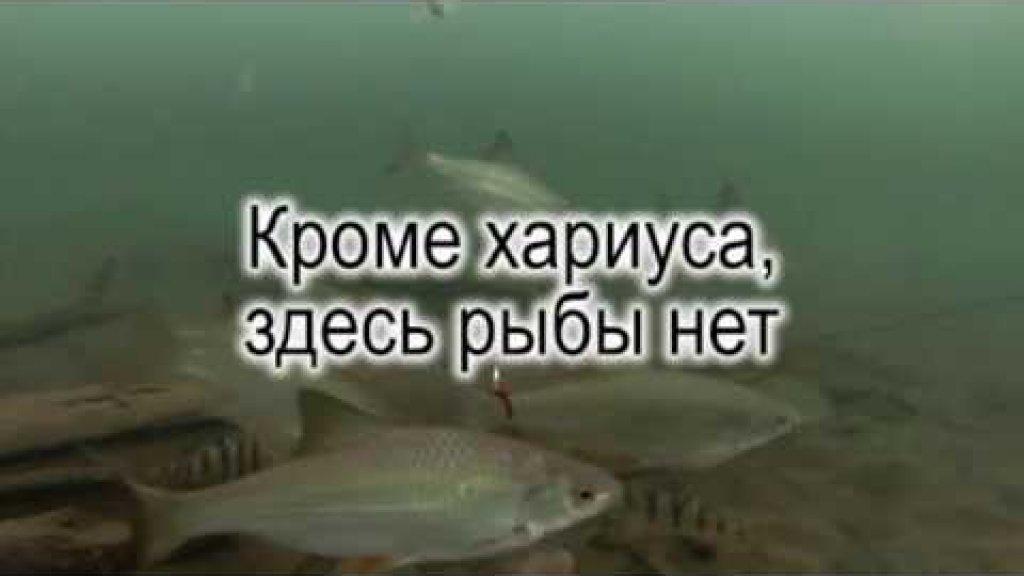 Кроме хариуса, здесь рыбы нет.Подводные съемки.