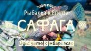 Рыбалка в Египте. Light game с баркаса