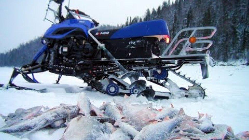 Рыбалка со снегоходом Dingo-150. Куча рыбы и удовольствий.