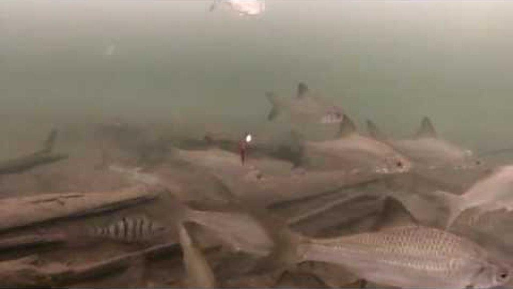 Клевая рыбалка с Динго-150