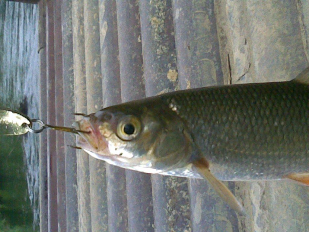 Що за рыб??