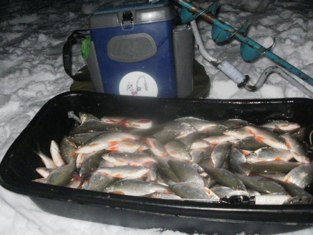 Рыбалка на оби сайт новосибирск
