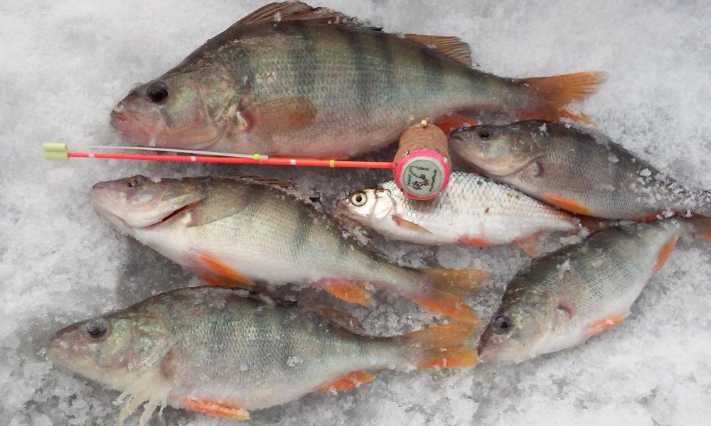 Рыбалка новосибирск река иня