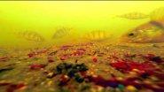Пузатые Окуни и Мотыль, Подводная Съемка