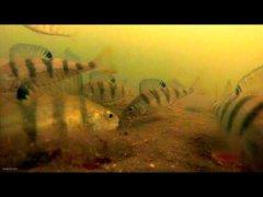 Камера на зимней рыбалке онлайн, Подводные съемки