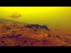 Подводное видео на водохранилище