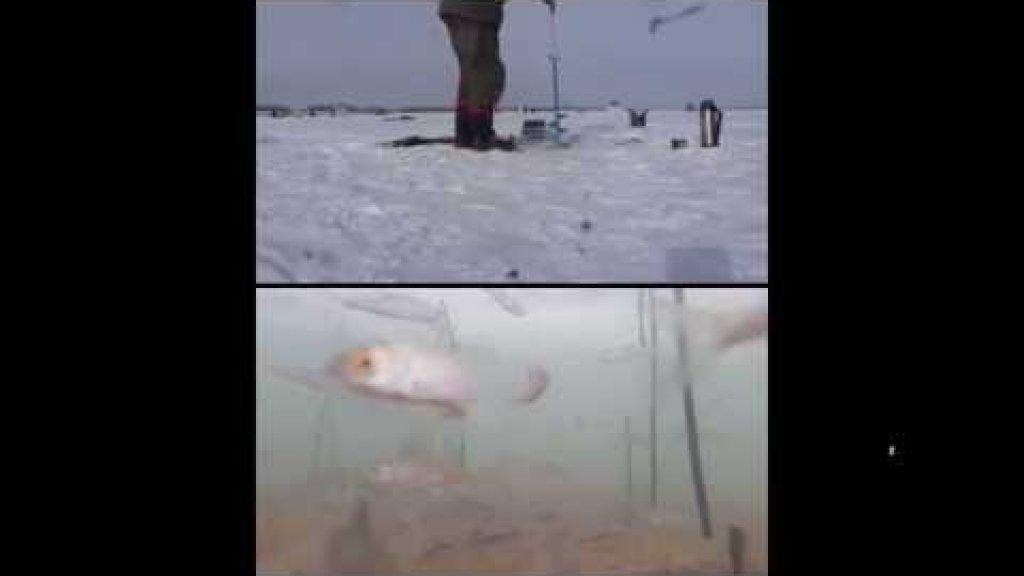 чего боится рыба и чего не боится