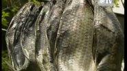 Диалоги о рыбалке. Золотой фонд. Вобла. ©