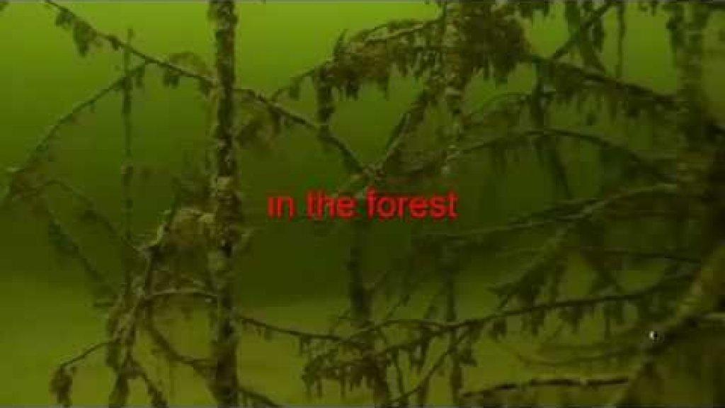 Огромные и мудрые карпы зимуют в лесу