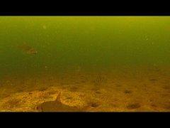 Подводная съемка зимой, Поклевки на мормышку