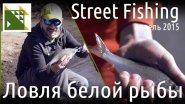 Ловля белой рыбы спиннингом.